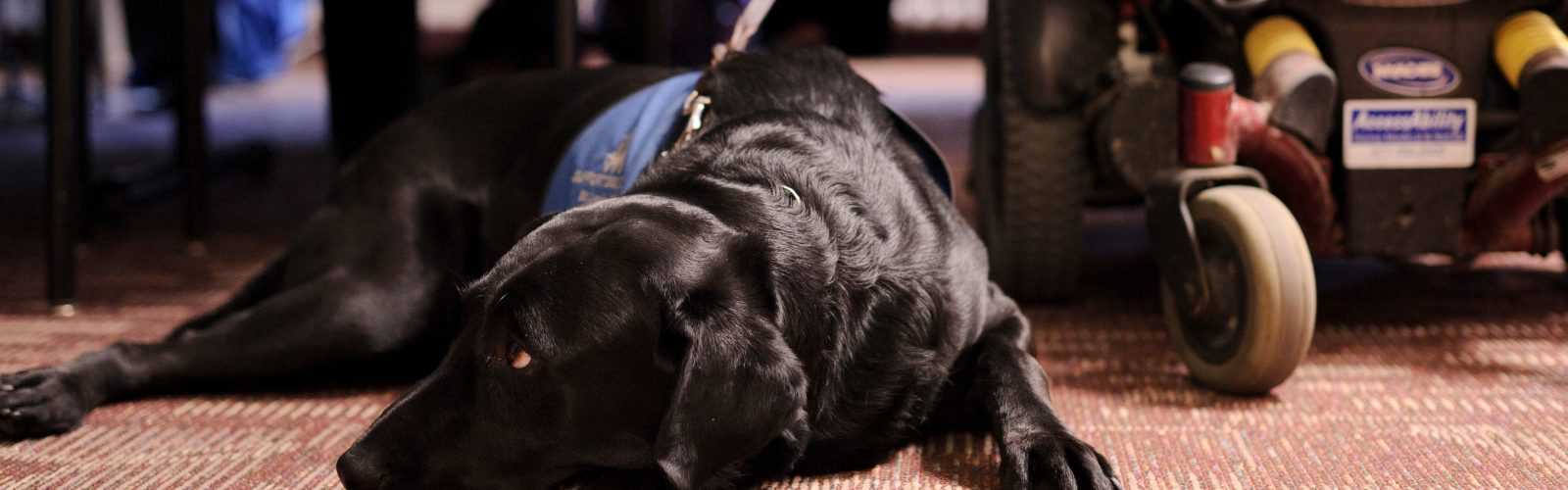 service dog rests at foot of owner